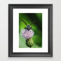 Bee And A Flower Framed Art Print