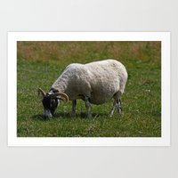 Sheep Baaaaa... Art Print