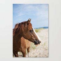 Horse Ii Canvas Print