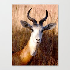 you lookin' at me?  Canvas Print