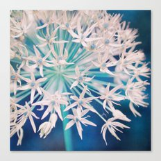 umbel Canvas Print