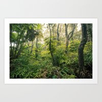 Hawaiian Rain Forest Art Print