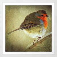 Christmas Robin Art Print