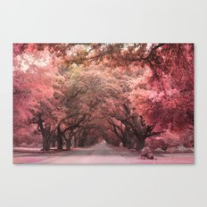 Autumn Fall Charleston South Carolina Oak Trees Canvas Print