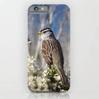 White-crowned Sparrow iPhone 6 Slim Case