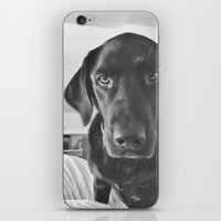 Dog 2 iPhone & iPod Skin
