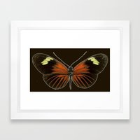 Untitled Butterfly Framed Art Print
