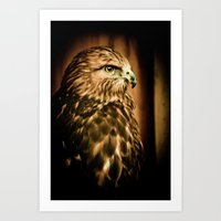 Hawk Eye Art Print