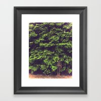 Prairie Redwoods Fern Gully Framed Art Print