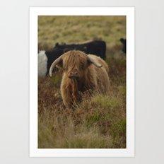 Highland Cow Exmoor Art Print
