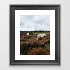 New Forest Wild Horses Framed Art Print