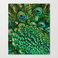 Peacocks Tail Canvas Print
