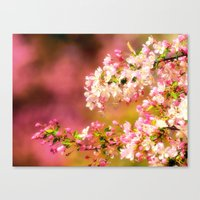 Pretty and Pink crab apple blossoms Canvas Print