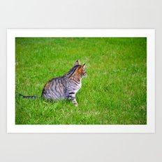 Orange and Tiger Cat Art Print