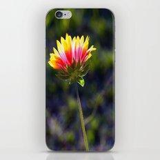 Sun-soaked iPhone & iPod Skin
