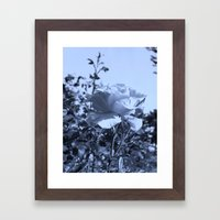 roses IX Framed Art Print