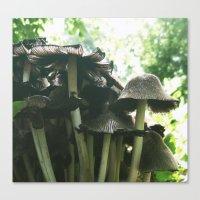 Magic mushrooms series - take 1 Canvas Print