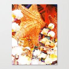Sea Shells Print Canvas Print