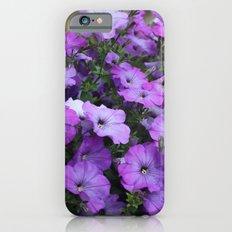 Petunias Slim Case iPhone 6s