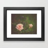 Silent Rose Framed Art Print