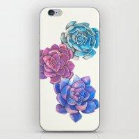 Vibrant Succulents  iPhone & iPod Skin