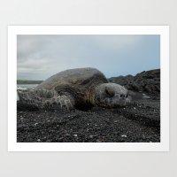 Sea Turtle - 1 Art Print