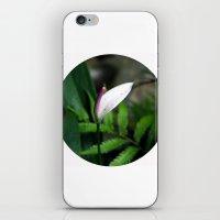Pink Anthurium iPhone & iPod Skin