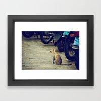 cat in cuba Framed Art Print