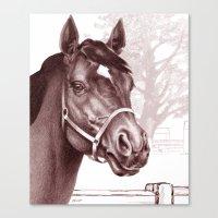 Stare Of The Stallion Canvas Print