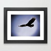 Black Vulture 1 Framed Art Print