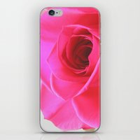 Pink Roses #2 iPhone & iPod Skin