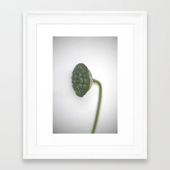Lotus Fruit Pod Framed Art Print