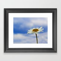 Daisy Daisy Framed Art Print