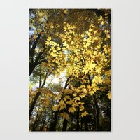 Golden Leaf Canopy Canvas Print