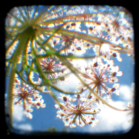 Look Up - Through The Viewfinder (TTV) Canvas Print