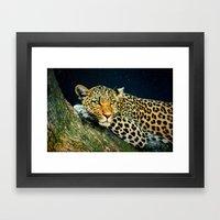 Leopards Gaze 3 Framed Art Print