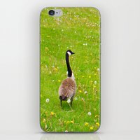 Goose in a field of flowers iPhone & iPod Skin