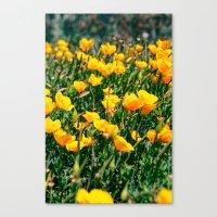 Golden State Canvas Print