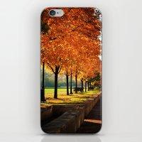 Urban Fall iPhone & iPod Skin