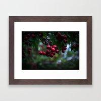 Pyracantha Framed Art Print