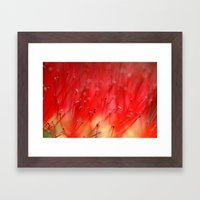 Callistemon's secret 2517 Framed Art Print