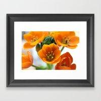 Ornithogalum, The Flower… Framed Art Print