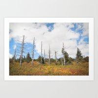 Trees in Mt. Rogers, Virginia Art Print