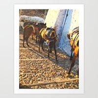 Donkeys Santorini 2 Art Print