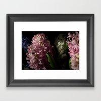 Hyacinth 11 Framed Art Print