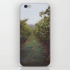 Orchard Row iPhone & iPod Skin