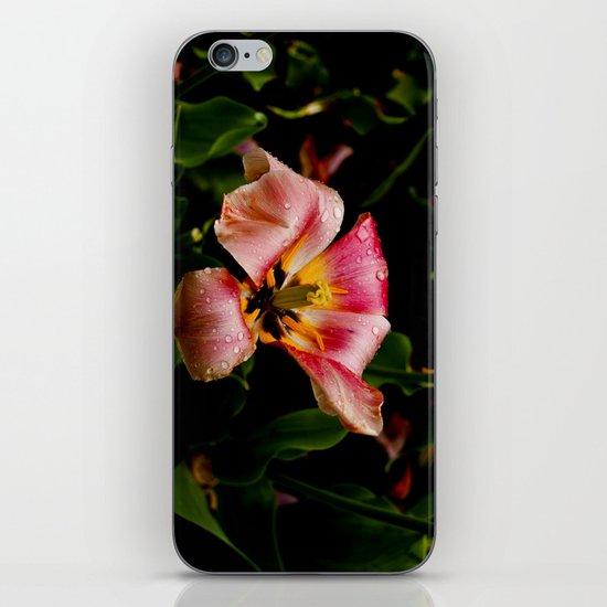 Morning Dew iPhone & iPod Skin