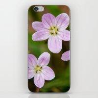 Trio Of Pink iPhone & iPod Skin