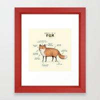 Anatomy of a Fox Framed Art Print