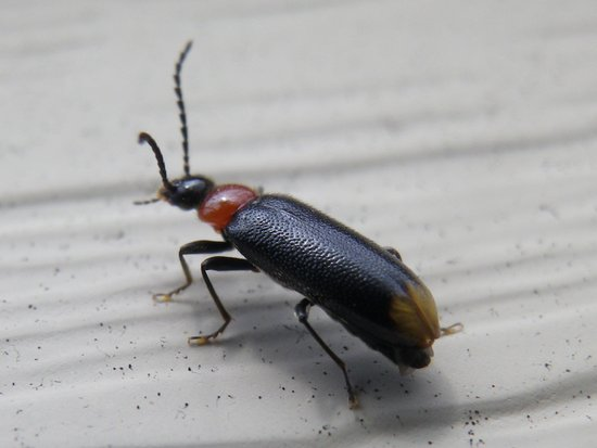 beetle bug Art Print